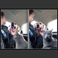Pies i kot pod jednym dachem...