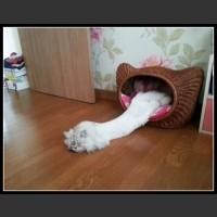 Koty wszędzie znajdą dla siebie idealne miejsce...